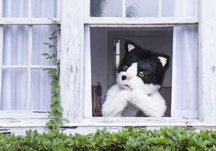 みんなの「窓辺の猫」でミュージックビデオを作ろう!の画像